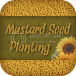 Mustard Seeds